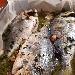 -Orata al forno con olive taggiasche alla vernaccia - - - Fotografia inserita il giorno 04-04-2020 alle ore 08:44:36 da pasqualefranzese