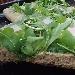 -Pizza integrale bianca con rucola e grana - - - Fotografia inserita il giorno 26-05-2019 alle ore 19:35:15 da pasqualefranzese