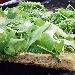 -Pizza integrale bianca con rucola e grana - - - Fotografia inserita il giorno 26-05-2019 alle ore 19:36:11 da pasqualefranzese