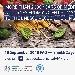-Presentazione Progetto FAO Dieta Mediterranea - -Presentazione Progetto FAO Dieta Mediterranea - Fotografia inserita il giorno 18-09-2019 alle ore 11:43:18 da nicolarivieccio