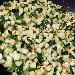 -Risotto con zucchine e vele di bottarga al lime - - - Fotografia inserita il giorno 21-09-2019 alle ore 17:45:06 da pasqualefranzese