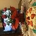 -Torta panna e fragole - -la torta panna e fragole è costituita da due strati di pan di Spagna separati al centro, dove è presente uno strato di crema ed uno di fragole; inoltre la torta presenta uno strato di panna tutto intorno e sulla parte superiore, dove sono presenti altri spicchi di fragole. - Fotografia inserita il giorno 26-05-2019 alle ore 17:05:32 da carmelaranieri
