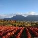 """Citta' europea del vino 2019, il sud riparte da """"Sannio Falanghina"""" e Matera Il programma prevede 120 eventi: il 25 marzo la capitale europea del vino incontrerà la capitale europea della cultura"""