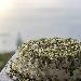 -torta al pistacchio - - - Fotografia inserita il giorno 19-11-2019 alle ore 18:58:24 da davideromanelli