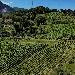 4 ottobre Trekking in vigna e degustazioni nel borgo del Fiano con il treno storico Irpinia Express -  - Fotografia inserita il giorno 28-09-2020 alle ore 11:42:11 da renatoaiello
