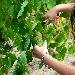 Aminea Winery  - - - Fotografia inserita il giorno 27-09-2021 alle ore 15:20:48 da eduardocagnazzi