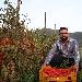 Aspettando...Il Mio San Marzano - - - Fotografia inserita il giorno 04-08-2021 alle ore 13:49:37 da renatoaiello
