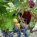 Cantina San Donaci - - - Fotografia inserita il giorno 24-09-2021 alle ore 09:18:36 da eduardocagnazzi