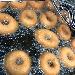 Ciambelle in frittura - - - Fotografia inserita il giorno 19-06-2019 alle ore 10:11:38 da vincenzoliuzzi