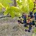 Grappoli 1 -  - Fotografia inserita il giorno 16-02-2020 alle ore 01:40:35 da lalepreelaluna