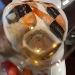 Greco di Tufo DOCG Vini DE STEFANO - - - Fotografia inserita il giorno 06-06-2020 alle ore 21:33:33 da carolagostini