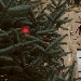15/12 - Villa Arconati - Bollate (MI) - Natale in Villa