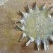 Rosone di grani antichi la saragolla lucana con foglie di rapa rossa e datterini gialli e rossi - - - Fotografia inserita il giorno 16-04-2021 alle ore 18:08:31 da silvfelicolucci
