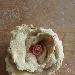 Rosone di grani antichi la saragolla lucana con foglie di rapa rossa e datterini gialli e rossi - - - Fotografia inserita il giorno 16-04-2021 alle ore 18:08:47 da silvfelicolucci