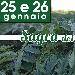 25 e 26 Gennaio - Cervia (RA) - Sagra del Cardo di Cervia