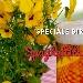 Speciale Birra della Piattaforma del Gusto - - - Fotografia inserita il giorno 22-05-2020 alle ore 18:16:58 da prodottiitaliani