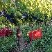 Vendemmia 4 - - - Fotografia inserita il giorno 16-02-2020 alle ore 01:45:06 da lalepreelaluna