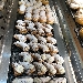 Vetrina dei dolci - - - Fotografia inserita il giorno 19-02-2020 alle ore 08:34:26 da vincenzoliuzzi