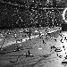 è tutto qui di Febo Del Zozzo  al MAMbo di Bologna dal 15 settembre al 4 ottobre 2021 - - - Fotografia inserita il giorno 15-09-2021 alle ore 14:10:59 da renatoaiello