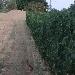 Lepre - - - Fotografia inserita il giorno 16-02-2020 alle ore 02:54:37 da lalepreelaluna