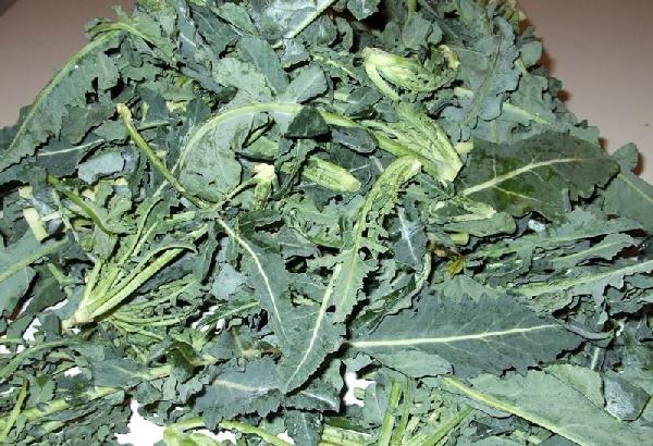 -Broccolo fiolato detto anche broccolo di Natale