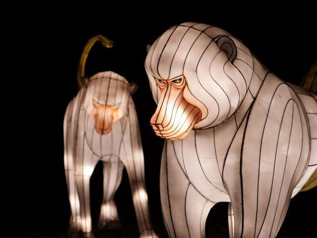 -foto Fico chengdou scimmie