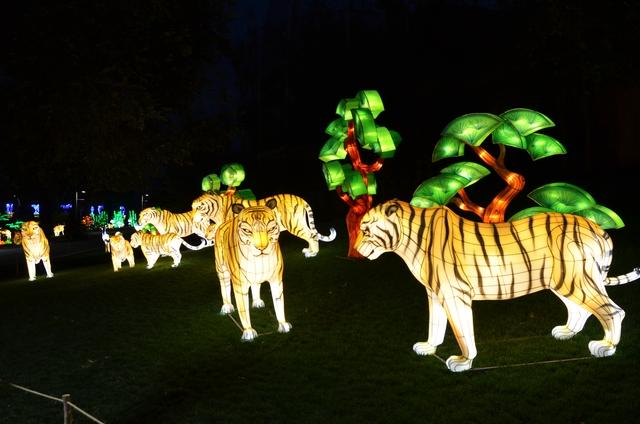-foto Fico chengdou tigri
