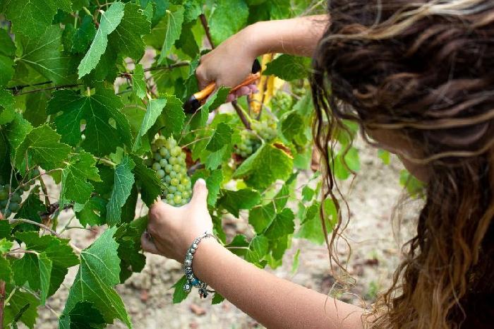 Aminea Winery