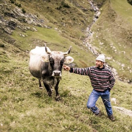 Mucche in alpeggio - Autore: Armin Huber